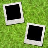 ramowa zieleń leafs fotografia Zdjęcia Stock