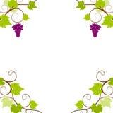ramowi gronowi winogrady ilustracji