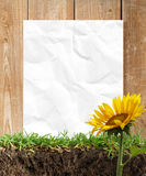 ramowi papierowi słoneczniki Fotografia Royalty Free