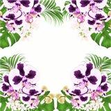 Ramowy bukiet z tropikalnych kwiatów kwiecistym przygotowania z piękną spoted storczykową Phalaenopsis palmą, filodendronu roczni ilustracja wektor