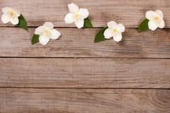 Ramowy jaśmin kwitnie na starym drewnianym tle z kopii przestrzenią dla twój teksta Odgórny widok tła karciany rysunków zaproszen Zdjęcia Stock