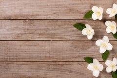 Ramowy jaśmin kwitnie na starym drewnianym tle z kopii przestrzenią dla twój teksta Odgórny widok tła karciany rysunków zaproszen Zdjęcie Stock