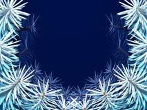 ramowy jodły drzewo Obrazy Royalty Free