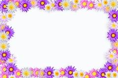 ramowy koloru lotos Obrazy Royalty Free