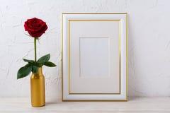 Ramowy mockup z Burgundy czerwieni różą w złotej wazie Fotografia Stock
