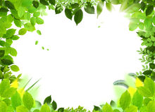 ramowy naturalny szablon Fotografia Royalty Free