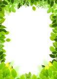 ramowy naturalny szablon Zdjęcie Royalty Free
