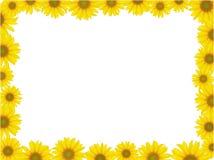 ramowy słonecznik ilustracja wektor