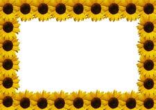 ramowy słonecznik Zdjęcia Stock
