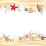 ramowy seashell ilustracji