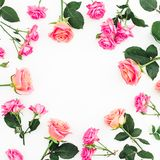 Ramowy skład z różowymi różami kwitnie, pączki i zieleń opuszcza na białym tle Mieszkanie nieatutowy, odgórny widok Obraz Royalty Free