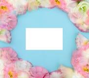 Ramowy skład z eustoma kwitnie na koloru tle Zdjęcia Royalty Free