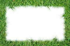 ramowy trawy zieleni ilustraci wektor Obraz Royalty Free