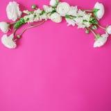 Ramowy wianek robić biali kwiaty na różowym tle Mieszkanie nieatutowy, odgórny widok Kwiatu wzór ranunculus i wyżlin Zdjęcie Stock