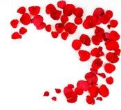 Ramowy wzór płatki czerwone róże Obraz Stock