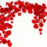 Ramowy wzór płatki czerwone róże Fotografia Royalty Free