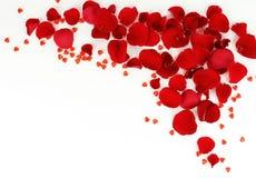 Ramowy wzór płatki czerwone róże Obrazy Royalty Free