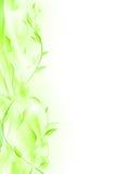 ramowy zielony liść Zdjęcie Royalty Free