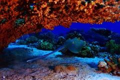Ramp sea under water Stock Photos