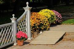 Rampa de madera, hortensia rosada y crisantemos coloridos en los potes Foto de archivo