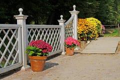 Rampa de madera, hortensias rosadas y crisantemos coloridos en los potes Fotografía de archivo libre de regalías