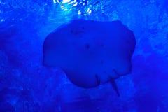Rampe de poissons dans l'eau bleue lumineuse meno de lombok d'île de l'Indonésie de gili près de monde sous-marin de tortue de me image libre de droits