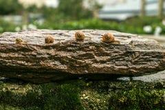 Rampement un d'escargots derrière un 03 Images libres de droits