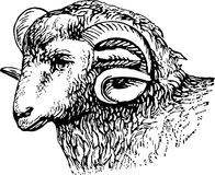 Rams head Royalty Free Stock Photos