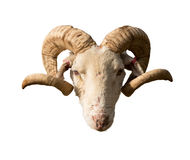 Rams head and horns Stock Image
