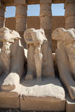 Rams at Karnak Temple Royalty Free Stock Photo