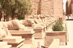 Rams at Karnak Temple - Egypt. Architecture of Karnak Temple at Luxor - Egypt Karnak temple - Most huge temple at Egypt royalty free stock photo