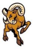 Rams mascot Stock Images