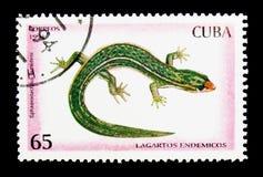 Ramsden \ «s λιγότερο Gecko (ramsdeni Sphaerodactylus), ερπετά serie στοκ φωτογραφίες με δικαίωμα ελεύθερης χρήσης