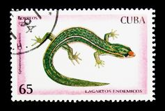 Ramsden's Least Gecko (Sphaerodactylus ramsdeni), Reptiles serie. MOSCOW, RUSSIA - NOVEMBER 25, 2017: A stamp printed in Cuba shows Ramsden's Royalty Free Stock Photos