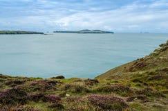 Ramsey Island – Wales, Vereinigtes Königreich stockfotos