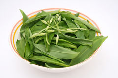 Ramson. Fresh ramson with flowers in a bowl Stock Photography