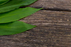 Ramson against wood. Big ramson leaves lying on a wooden ground Royalty Free Stock Photo