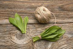 Ramson bear garlic bunch tied with rope on old wooden background. Royalty Free Stock Photo