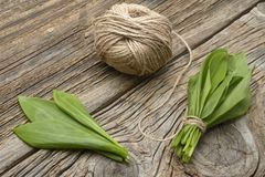 Ramson bear garlic bunch tied with rope on old wooden background. Stock Photography