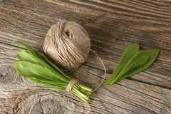 Ramson bear garlic bunch tied with rope on old wooden background. Royalty Free Stock Photography