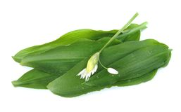 Ramson Blätter und Blume Stockbilder