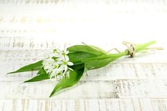 Ramson. Bunch of fresh ramson on wooden background Royalty Free Stock Photo