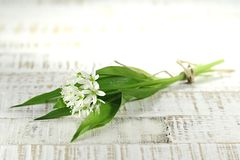 Ramson. Bunch of fresh ramson on wooden background Royalty Free Stock Photos