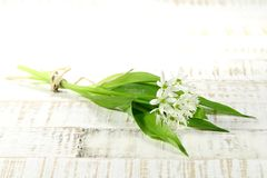 Ramson. Bunch of fresh ramson on wooden background Stock Image