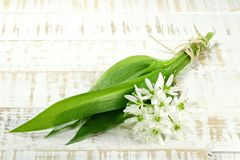 Ramson. Bunch of fresh ramson on wooden background Royalty Free Stock Images