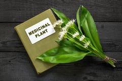 Ramson and directory medicinal plant Stock Photos