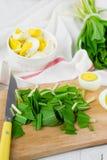 Ramson et oeufs à la coque Placez pour la salade de ressort Photo stock