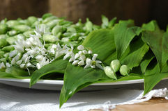 Ramson leaves and flower. Fresh blooming Ramsons on a plate Stock Images