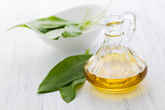 Fresh ramson oil. Ramson oil in a bottle Royalty Free Stock Photo