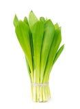 Ramson onion cluster Stock Image